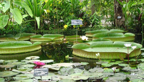 jardin botanique du parc de la t te d 39 or splatsh. Black Bedroom Furniture Sets. Home Design Ideas